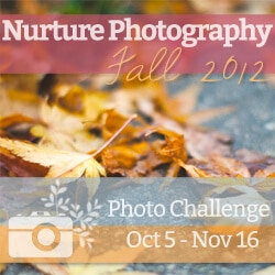 nurture fall photography challenge